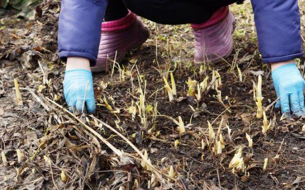 Kalendarz ogrodnika na marzec: 5 najważniejszych prac, które w marcu trzeba zrobić w ogrodzie