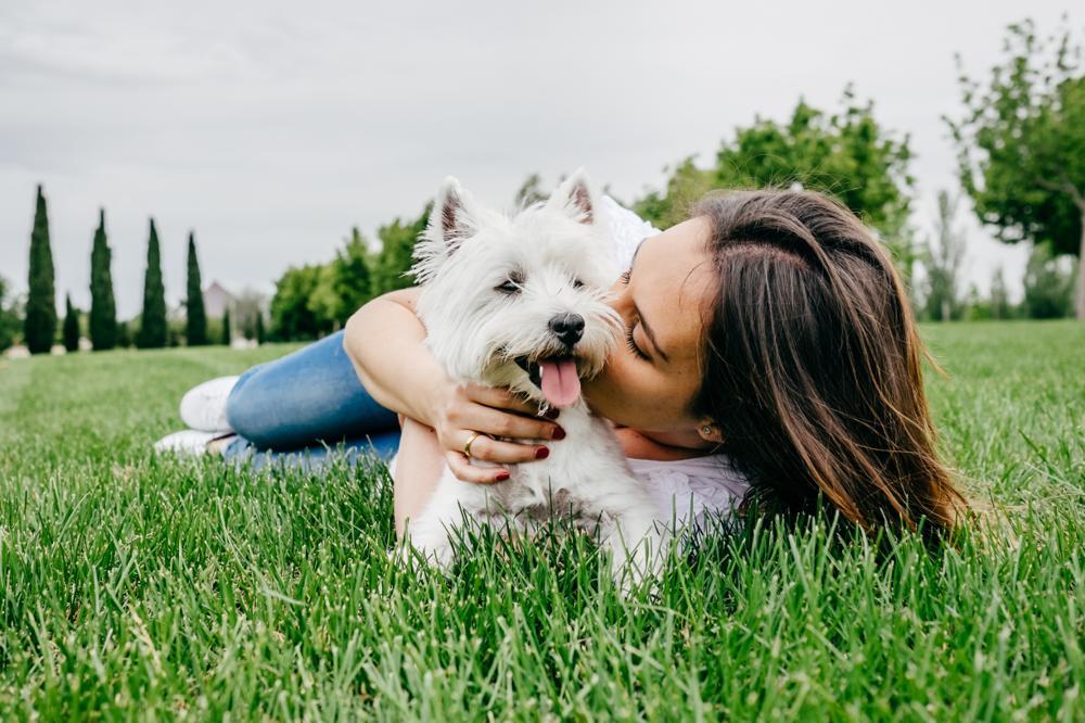 Nużyca u psa: objawy, leczenie. Czy nużeniec jest zaraźliwy?